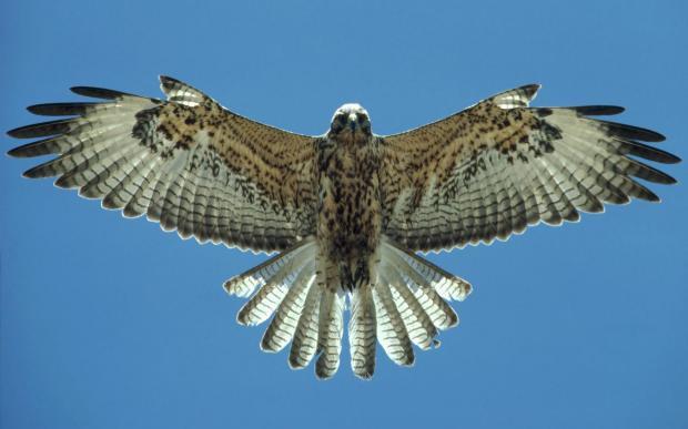 falcon-1525328