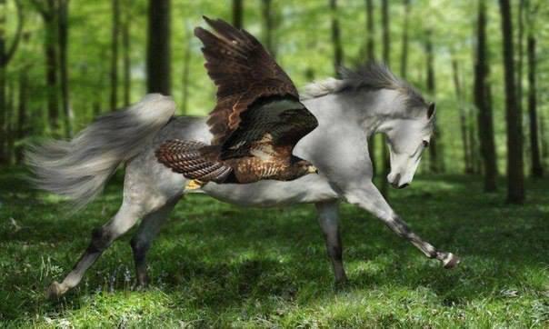 orzeł i koń