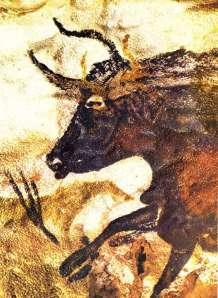 blackbull2
